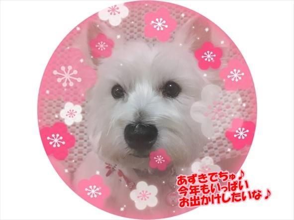 azuki_20171231184015b40.jpg