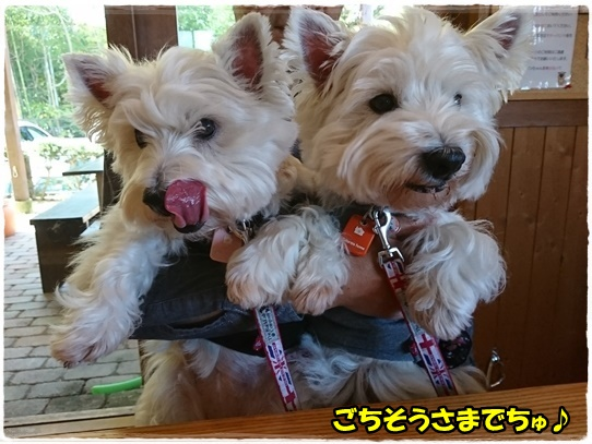 cafe12_20171121210057732.jpg