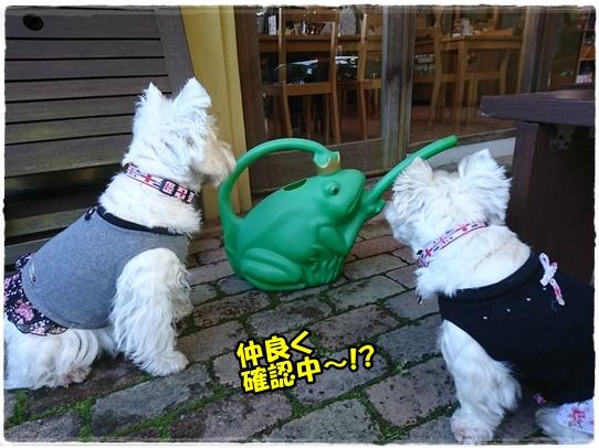 cafe4_201711212003328d8.jpg