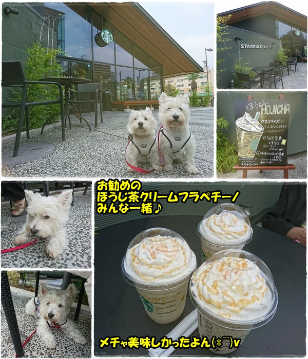 cafe_20171010183223d77.jpg