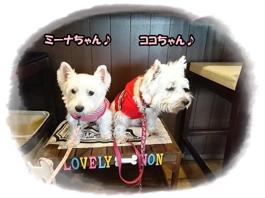 cafe_20171027185309d13.jpg