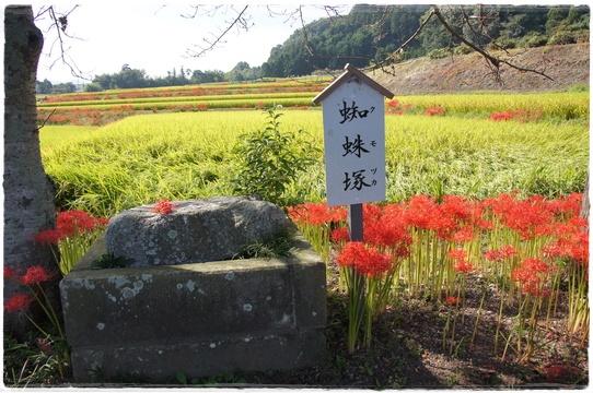 higanbana2.jpg