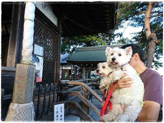 shirohigejinjya4.jpg