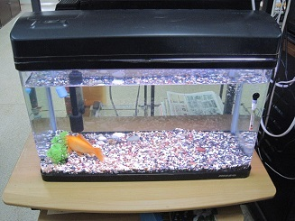 新しい水槽