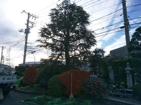DSC_0737hima.jpg