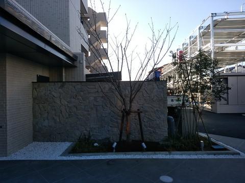 DSC_1042mi.jpg