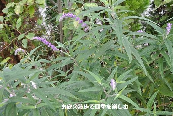 amejisutose-ji10_201709250919568ae.jpg