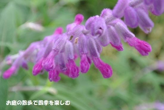 amejisutose-ji11.jpg