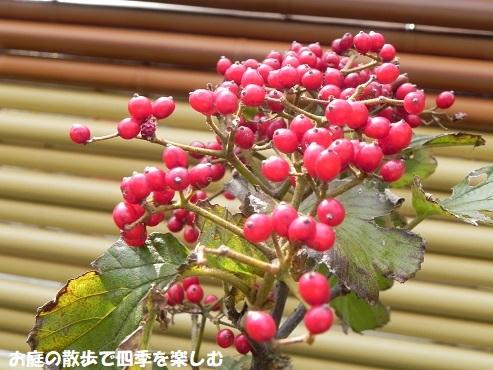 gamazumi32.jpg
