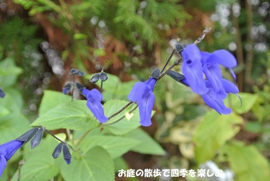 medo-se-ji7_20170925091955d13.jpg
