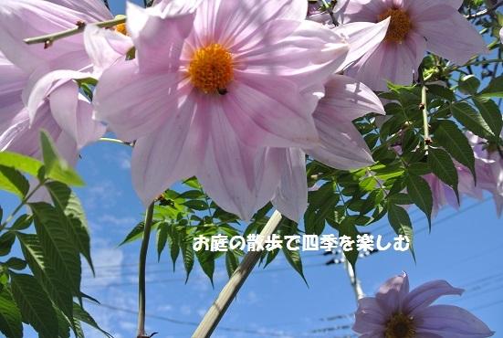 niwa118_20171114111007d88.jpg