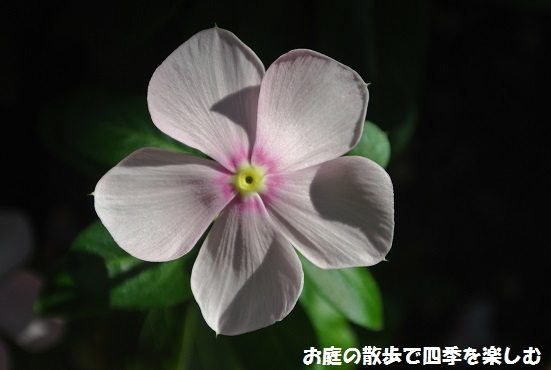 pinku2_20171017124703e6a.jpg