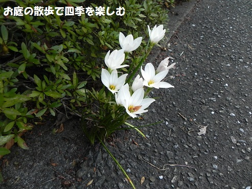 tamasudare2_201710021132130de.jpg