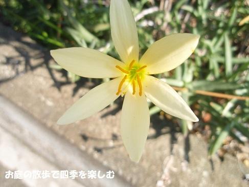 tamasudare3.jpg