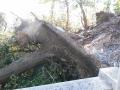 181028台風の被害らしき倒木