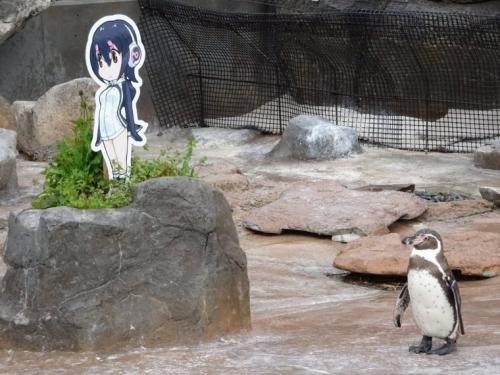 グレープ君 フンボルトペンギン けものフレンズ