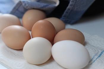 eggs-352460_960_720.jpg