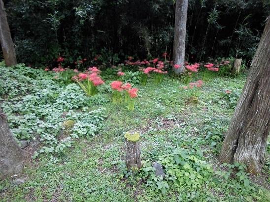 17.9.27 日和田山岩トレ (26)
