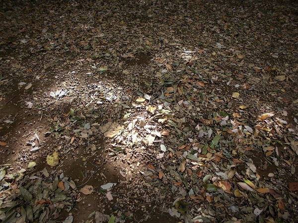 17.11.11 散歩で秋を拾う (50)