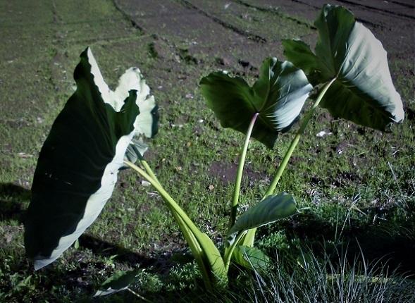 17.11.7 ママチャリ・花の丘 (62)