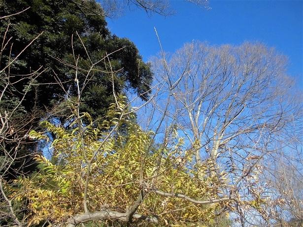 17.12.28  散歩(6)