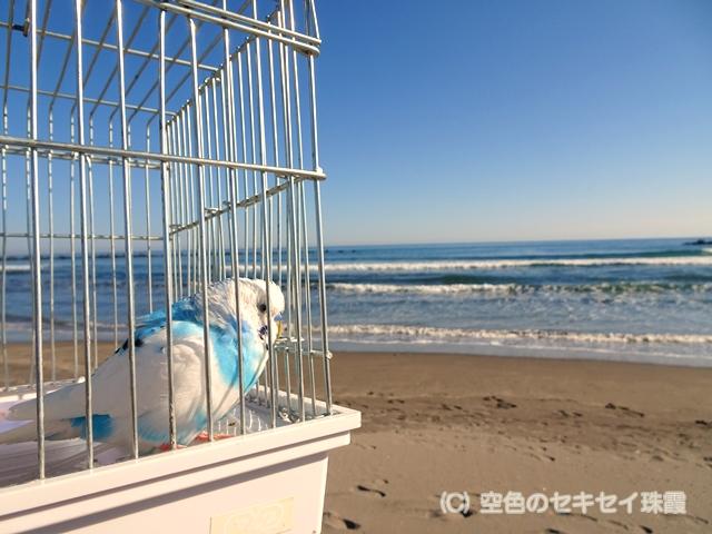 イタンキ浜 空色のセキセイ珠霞