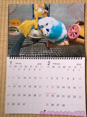 写真で2018年カレンダー 1~2月 空色のセキセイ珠霞