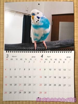 写真で2018年カレンダー 3~4月 空色のセキセイ珠霞