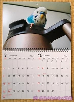 写真で2018年カレンダー 9~10月 空色のセキセイ珠霞