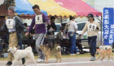 ノンノ6ヶ月21日仔犬牝の部比較審査A1席