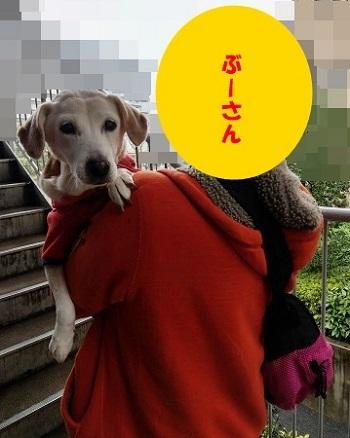 17_11_25_01.jpg