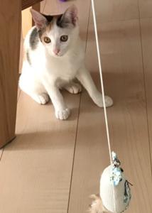 ココちゃんナッツちゃん2
