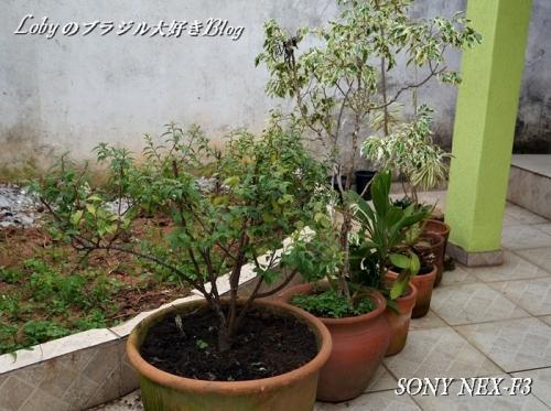 0-sony_nex3-007uekibati.jpg
