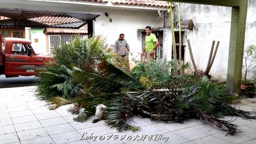 ガーデン大改造004