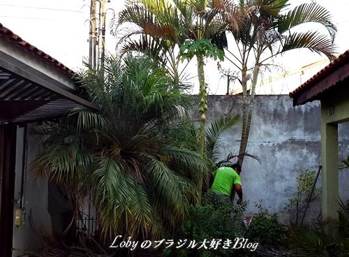 ガーデン大改造002