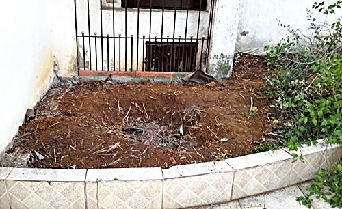 ガーデン大改造008