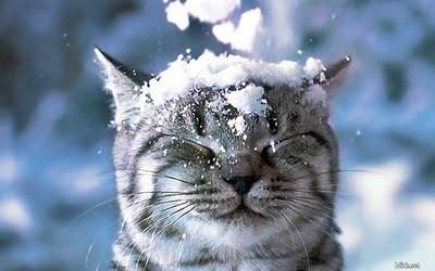 雪をかぶったネコ