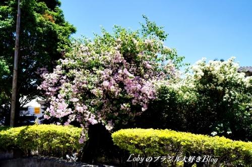 1-ふるさと祭り012入り口横の花木1