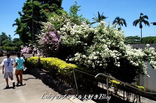 1-ふるさと祭り012入り口横の花木