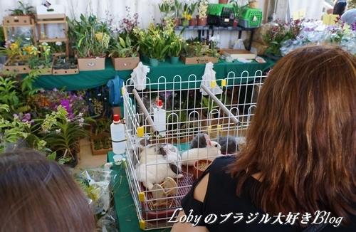 1-ふるさと祭り012ウサギ2