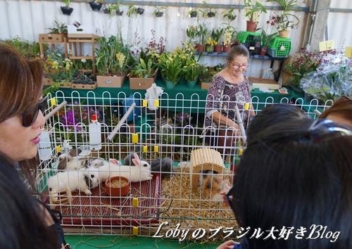 1-ふるさと祭り012ウサギ3