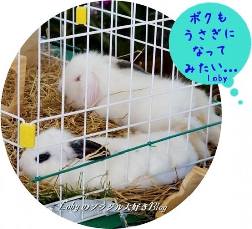 1-ふるさと祭り012ウサギ1
