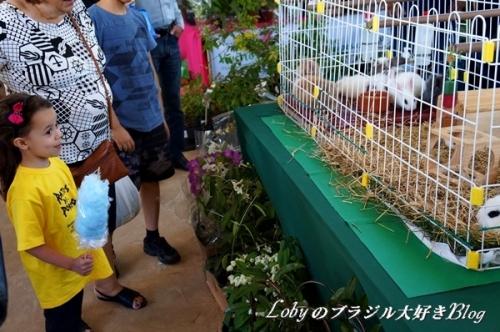 1-ふるさと祭り012ウサギ