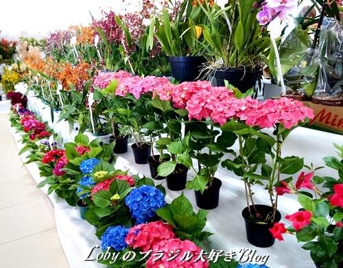 2-ふるさと祭りー004花