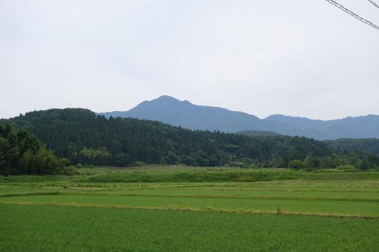 yoneyama176180001.jpg