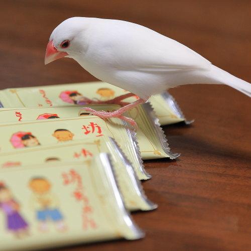 sakusaku sabu (3)