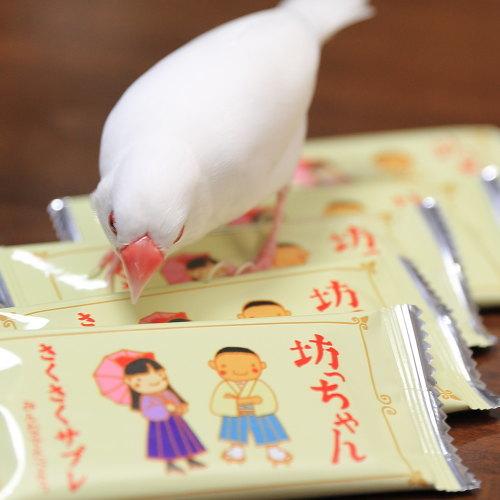 sakusaku sabu (4)