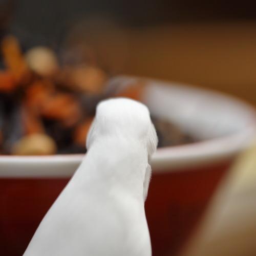 hijiki taberub (1)