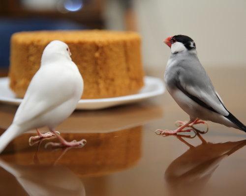 si fonn keki (1)