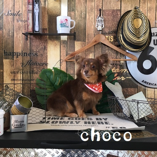 choco 杉本